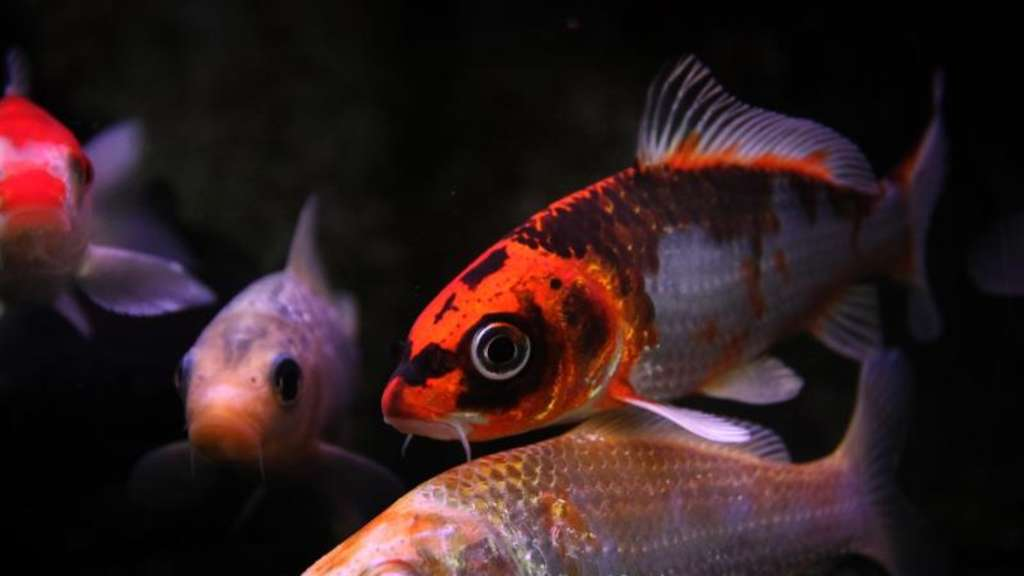 Fischteich im winter eisfrei halten magazin for Gartenteich im winter fische