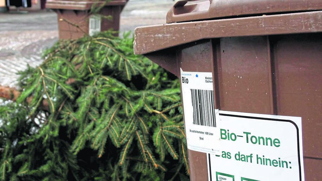 Tannenbaum Wegwerfen.Einsammeln Der Weihnachtsbäume In Der Region Abhol Aktionen