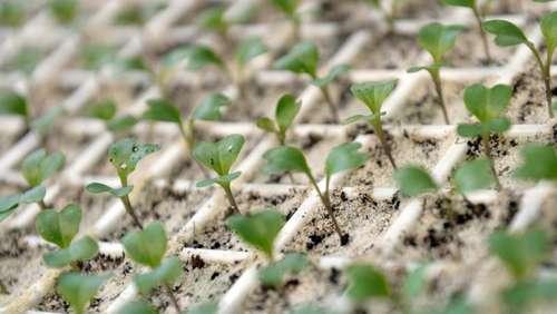 Nachsaat Im Gemüsebeet Durch Die Dürre Bringen