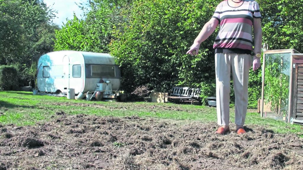 Wildschweine Im Eigenen Garten Was Kann Man Dagegen Tun Witzenhausen