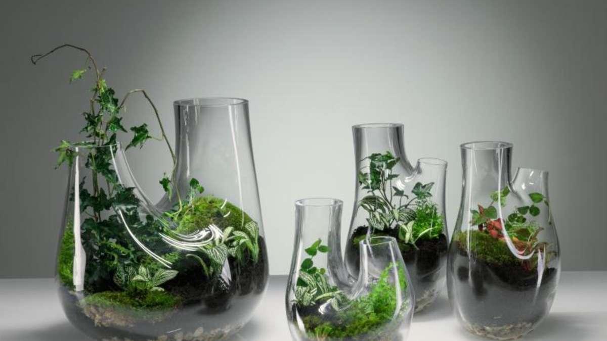 wie pflanzen im glas gedeihen wohnen. Black Bedroom Furniture Sets. Home Design Ideas